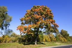 Yellowing tree Stock Photo