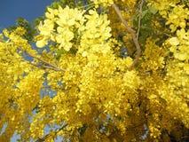 Yellowish Flower. S Fresh royalty free stock photos