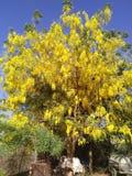 Yellowish Flowers. Tree stock images