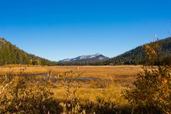 Hope Valley, California, United States. Yellowish grass, plants and trees with blue, clear sky and mountains in the background photogarphed late summer. Hope stock photography