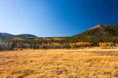 Hope Valley, California, United States. Yellowish grass, plants and trees with blue, clear sky and mountains in the background photogarphed late summer. Hope stock image