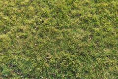 Yellowish green grass in late autumn. From above Stock Photography
