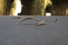 Yellowish leaf. Fallen yellowish leaf Royalty Free Stock Photo
