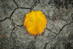A yellowish leaf. On a ground Royalty Free Stock Photos