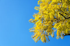 Yellowish Leaves Stock Photos