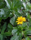 Yellowish po środku greeness zdjęcie royalty free