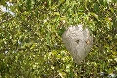 Yellowjacket Nest-Recht Lizenzfreie Stockfotografie