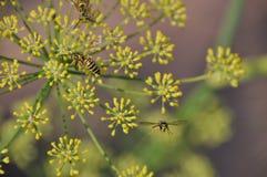 Yellowjackets und gelbe Blumen stockfotos