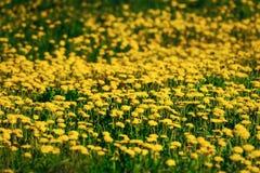 Yellowness Royalty Free Stock Image
