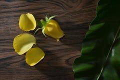 YellowRose Photographie stock