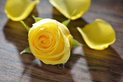 YellowRose Photo stock