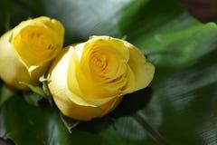 YellowRose Photographie stock libre de droits