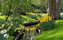 Free Yellows Daffodils And White Narcissi At Keukenhof Gardens, Lisse, Netherlands. Keukenhof Is Known As The Garden Of Royalty Free Stock Photography - 145785137