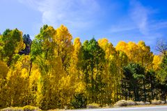 Yellows Of Fall With Changing Colors Of Trees. Changing Colors Of Autumn Trees With Green Turning To Gold stock photo