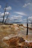 yellowstone δέντρων σκελετών στοκ φωτογραφίες