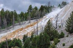 Yellowstone, μαμμούθ καυτές ανοίξεις Στοκ Εικόνες