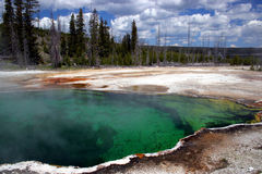 yellowstone Royaltyfria Bilder
