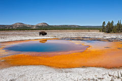 Yellowstone Photo libre de droits