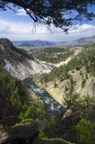 Yellowstone Royalty Free Stock Image