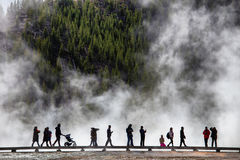 yellowstone Arkivfoton