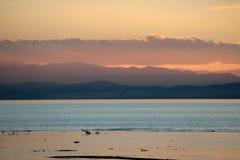 yellowstone Fotografering för Bildbyråer
