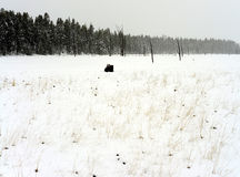 Yellowstone American Bison Stock Images