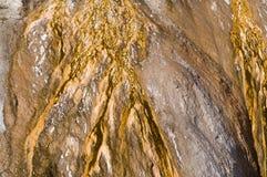 Yellowstone Background Royalty Free Stock Image
