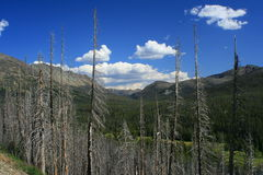 Yellowstone brannte Wald stockfotografie