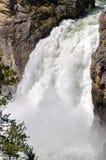 Yellowstone cai no parque nacional de Yellowstone imagens de stock