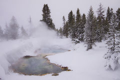 Yellowstone in de winter, myst advertentiesneeuw Royalty-vrije Stock Fotografie