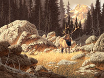Yellowstone Elk. Image from an original painting by Larry Jacobsen. / AF-005 stock photos