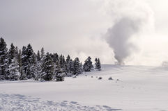 Yellowstone en hiver Photos libres de droits