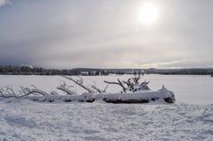 Yellowstone en invierno imagenes de archivo