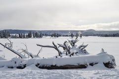 Yellowstone en invierno fotos de archivo