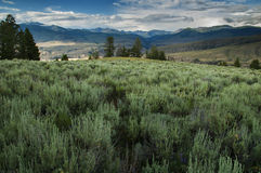 Yellowstone fält Arkivbilder