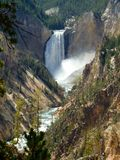 Yellowstone falls mid summer in Yellowstone National Park royalty free stock photo