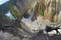 Yellowstone upper Falls with Driftwood in the foreground Stock Photography