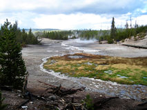 Yellowstone geothermal grassland. Geothermal grassland and wild forest in Yellowstone National Park (USA Royalty Free Stock Photo