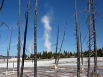 Yellowstone-Geysir Stockfoto