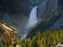 Yellowstone Grand Canyon, vattenfallflod, Wyoming Fotografering för Bildbyråer