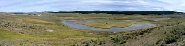 Yellowstone-Grasland Stockbilder