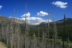 Yellowstone ha bruciato la foresta Fotografia Stock