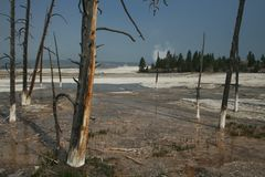 Hot spring landscape with dead trees and steam at Yellowstone stock photo