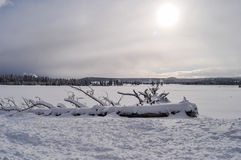Yellowstone i vinter Arkivbilder