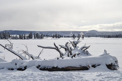 Yellowstone i vinter Arkivfoton