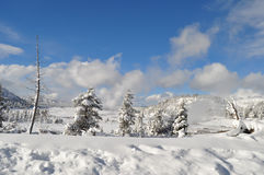 Yellowstone i vinter Arkivfoto
