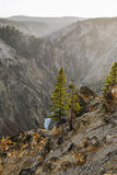 Yellowstone jar Obrazy Royalty Free
