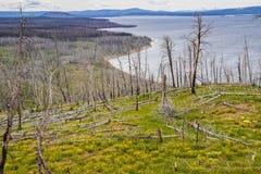 Yellowstone jeziora linia brzegowa fotografia royalty free