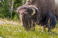 Yellowstone jeziora linia brzegowa zdjęcie royalty free