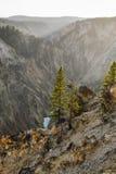 Yellowstone kanjon Royaltyfria Bilder